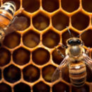Move Over Lustre & Spectrum Scale – Here Comes BeeGFS?